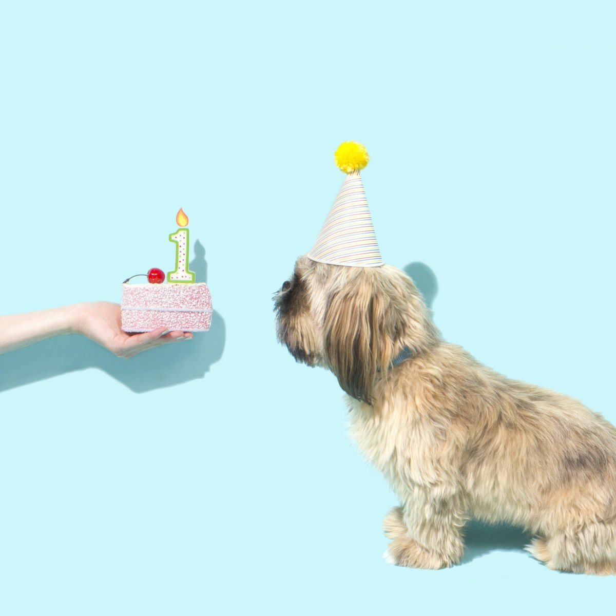a doggy receiving a birthday cake